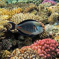 Unterwasserfoto vom Korallenriff - © Rosel Eckstein/Sohn / pixelio.de