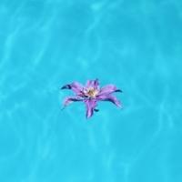 Blume im Pool - © Viola Wirth / pixelio.de